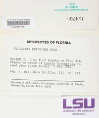 Frullania ericoides image