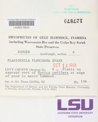 Plagiochila floridana image