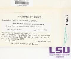 Sciuro-hypnum oedipodium image