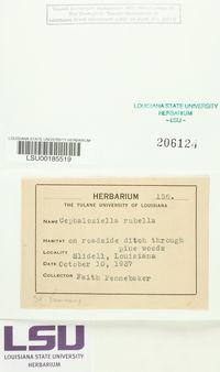 Cephaloziella rubella image