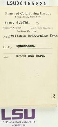 Frullania brittoniae image