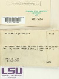 Marchantia polymorpha image