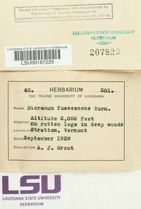 Dicranum fuscescens image