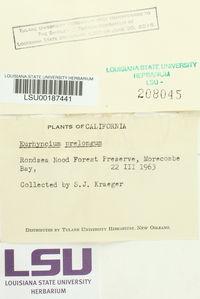 Kindbergia praelonga image