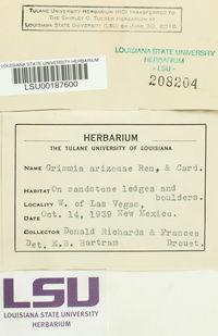 Grimmia arizonae image