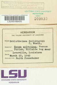 Schlotheimia rugifolia image