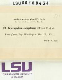 Scleropodium cespitans image