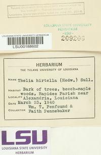 Thelia hirtella image