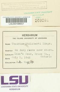 Thuidium assimile image
