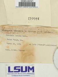 Puccinia iridis image