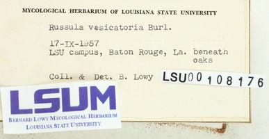 Russula vesicatoria image