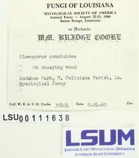 Gloeoporus thelephoroides image