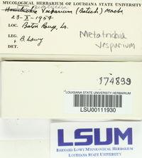 Metatrichia vesparium image