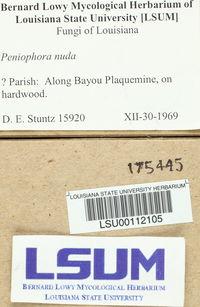Peniophora nuda image