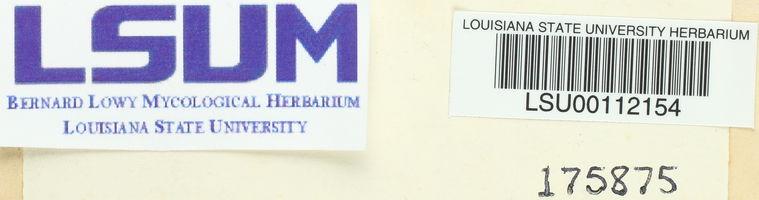 Physarum cinereum image