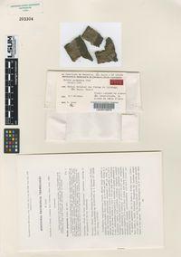 Image of Exidia pergamena
