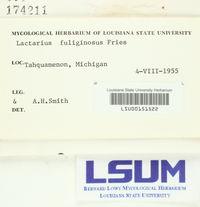 Lactarius fuliginosus image