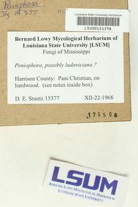 Phlebia ludoviciana image