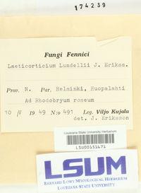 Corticium boreoroseum image