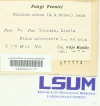 Cistella acuum image