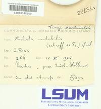 Kuehneromyces mutabilis image