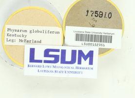 Physarum globuliferum image