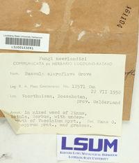 Russula claroflava image