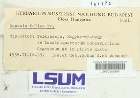 Russula fellea image