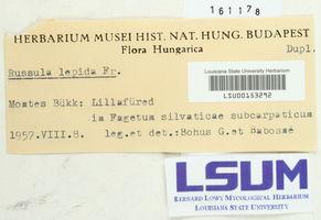 Russula lepida image