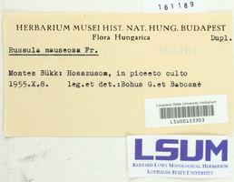 Russula nauseosa image