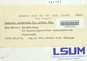 Russula veternosa image
