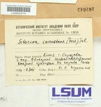 Sebacina incrustans image
