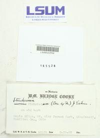 Steccherinum fimbriatum image