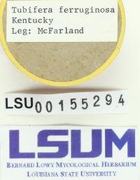 Image of Lycoperdon ferruginosum