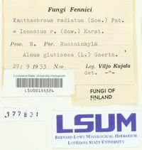 Mensularia radiata image