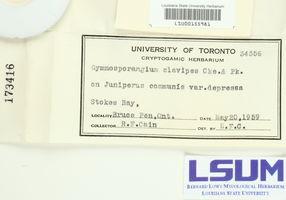 Gymnosporangium clavipes image