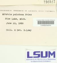 Mitrula paludosa image