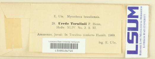 Image of Uredo torulini
