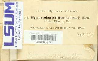 Image of Hymenochaete fissolobata