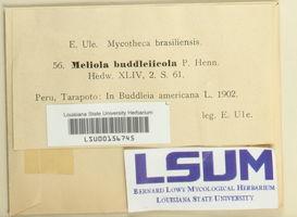 Meliola buddleyicola image