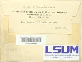 Meliola iquitosensis image