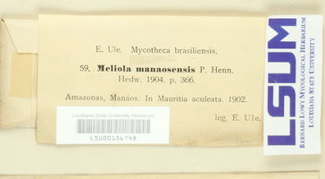 Meliola manaosensis image