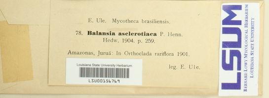 Balansia asclerotiaca image
