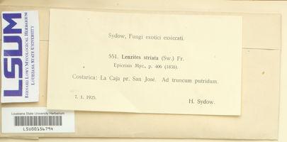 Gloeophyllum striatum image