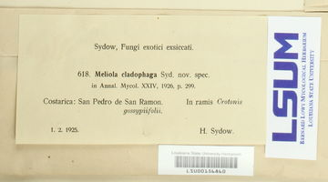 Meliola cladophaga image