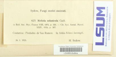 Meliola solanicola image