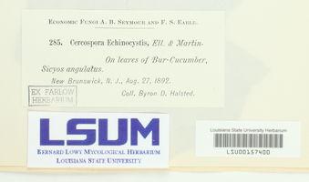 Cercospora echinocystis image