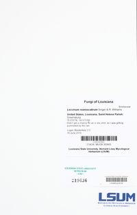 Leccinum roseoscabrum image