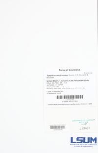 Tylopilus variobrunneus image
