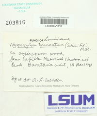 Annulohypoxylon truncatum image
